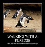Funny Funny Pictures - Walking with a purpose