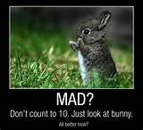 Funny Quotes about Life happy bunny | Funny All The Time