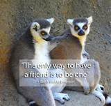 Wonderful Quotes on Friendship | Have A Fun Here !!!!!