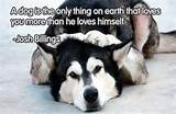 Funny & Famous Quotes about Dogs (2)